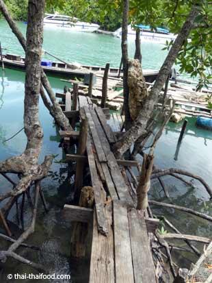 Weg durch die Mangroven zum Meer mit Brettern gebaut
