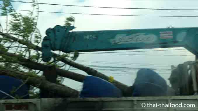Bäume auf LKW
