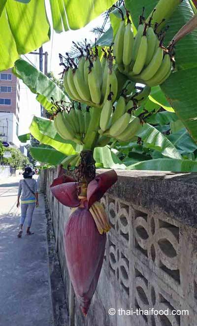 Bananenblüten