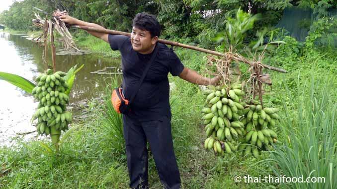 Bananenstauden transportieren
