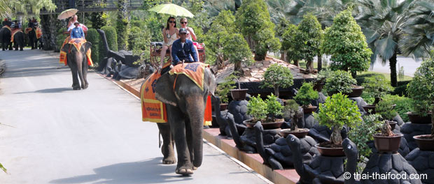 Elefanten reiten im Park für jedermann