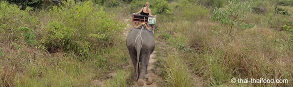 Trekking Tour mit Elefanten