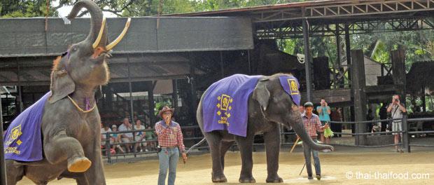 Thailändische Elefantenshow