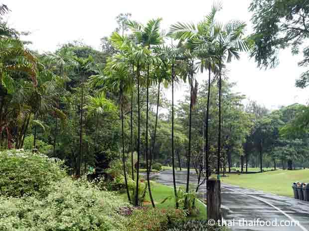 Fahrradwege im Suan Rot Fai Park
