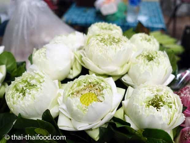 Geöffnete weiße Lotosblüten