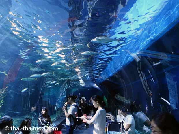 Unterwassertunnel aus Glas