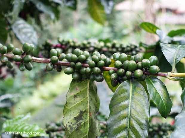 Thai Kaffee