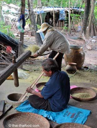 Grüner Reis von den Reisspelzen trennen