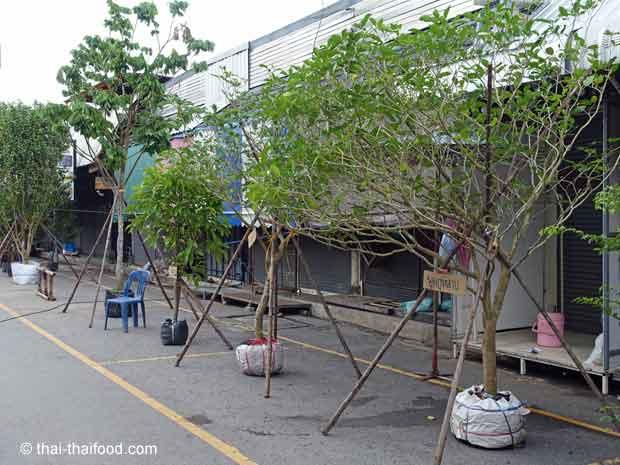 Bäume auf dem Chatuchak Pflanzenmarkt