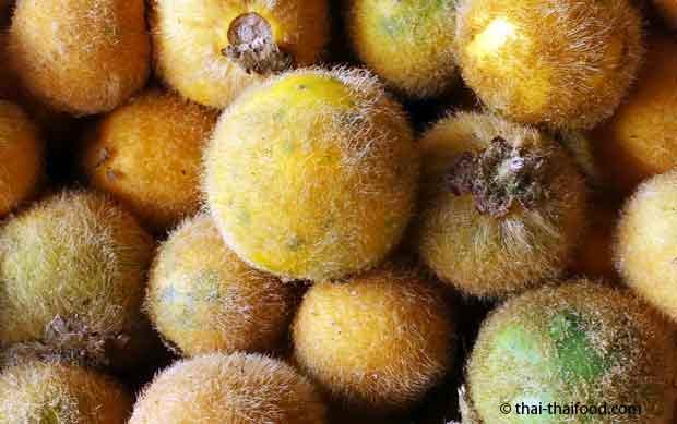 Solanum Ferox Frucht