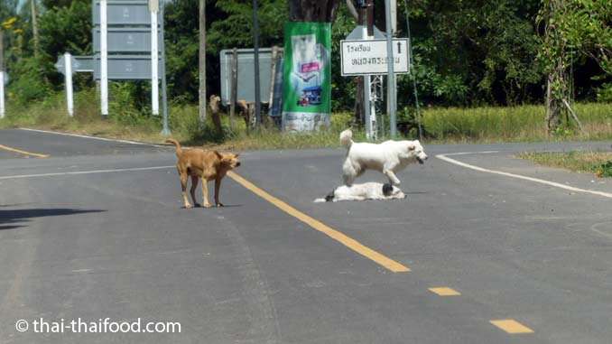 Spielende Hunde auf der Strasse
