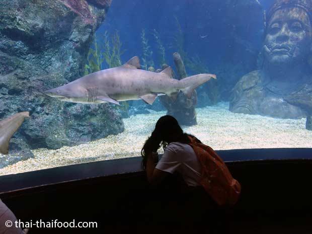 Im Glastunnel unter Wasser