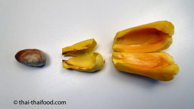 Jackfrucht Samen