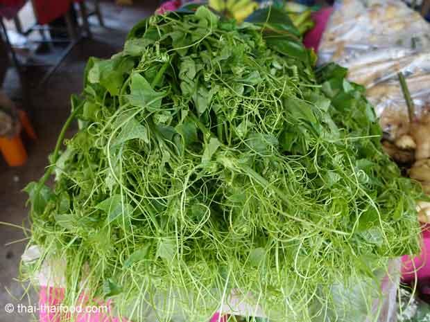 Junge Chayoke Ranken und Blätter kann man essen