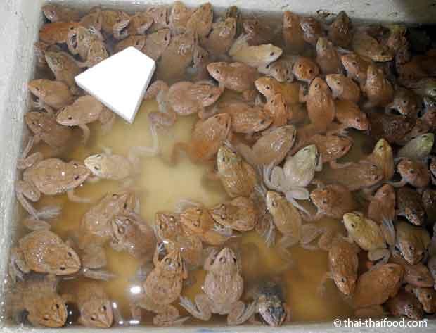 Junge Frösche essen in Thailand