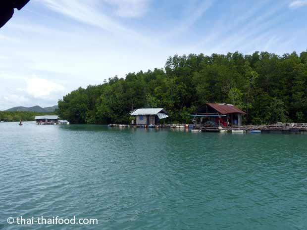 Schwimmende Fischfarmen