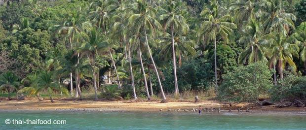 Strand auf der Insel Koh Chang