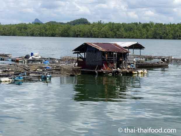 Die Fischer haben schwimmende Häuser auf dem Meer