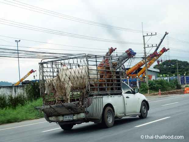 Viehtransport in Thailand