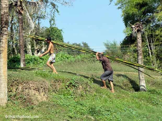 Lange Bambusstangen in Thailand