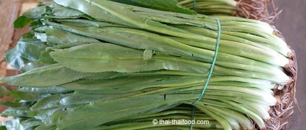 Langer Koriander auf einem Thai Markt