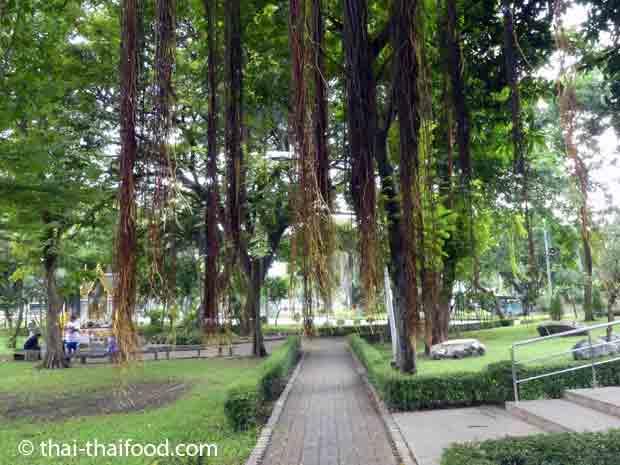 Lianen beim Tempel im Lumpini Park