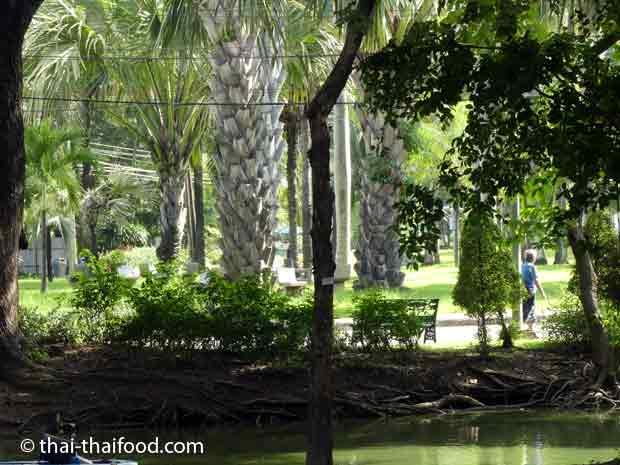 Palmen im Palmengarten