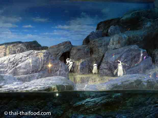 Pinguine im Sea Life Bangkok Ocean World