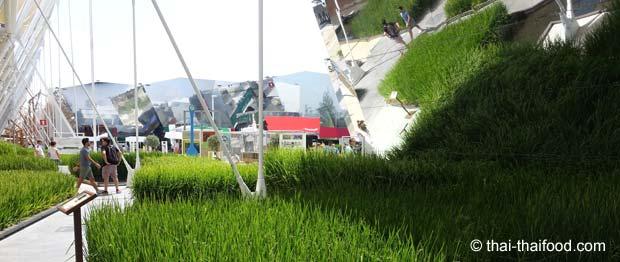 Reispflanzen auf der Expo 2015