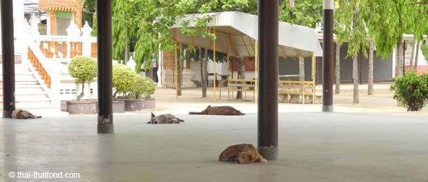 schlafende freilebende Hunde in Thailand