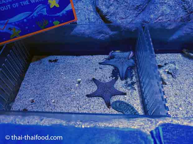 Meeres Streichelzoo im Sea Life Bangkok Ocean World