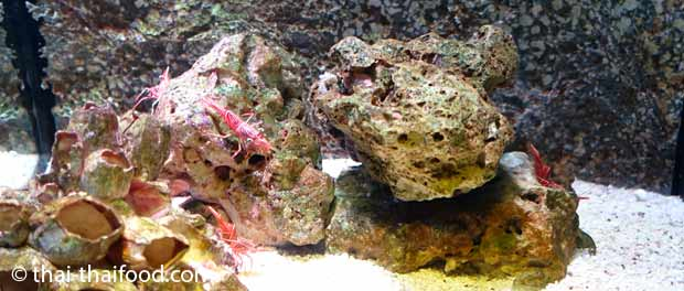 Sealife Bangkok Garnelen im Aquarium