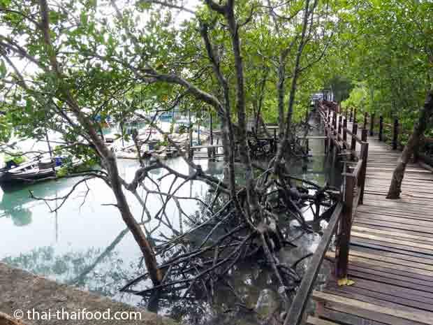 Steg zum Eco Tourism Village und zum Restaurant