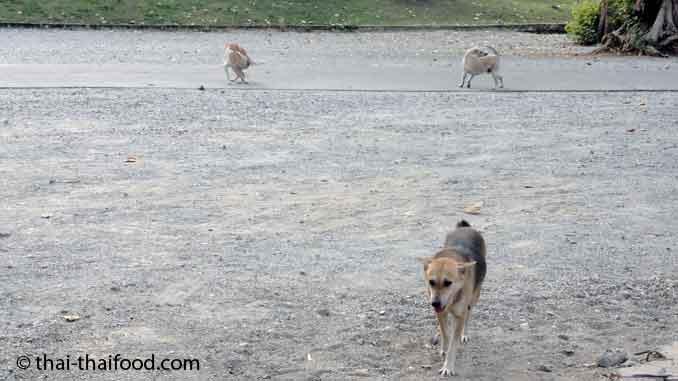 Hunderudel in Dörfern