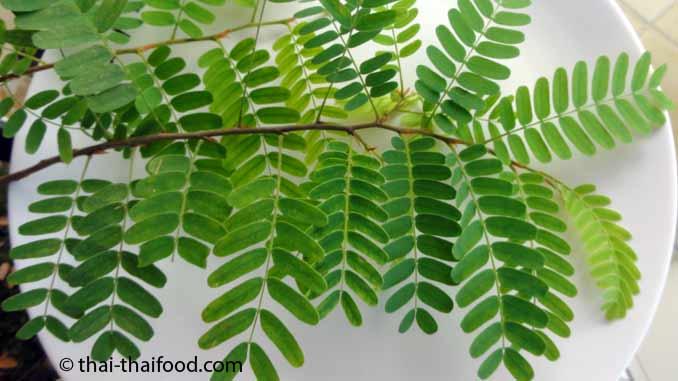 Tamarindenblätter