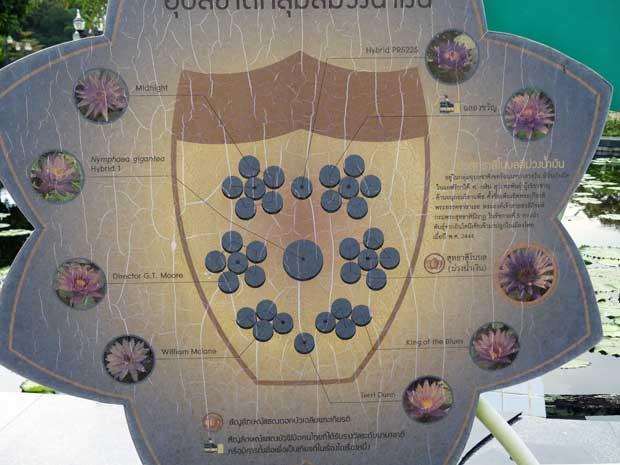 Anordnung der Lotusblumen im Teich