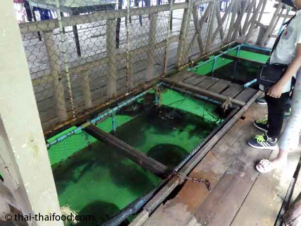 Meerestiere im Netz unter dem schwimmenden Restaurant
