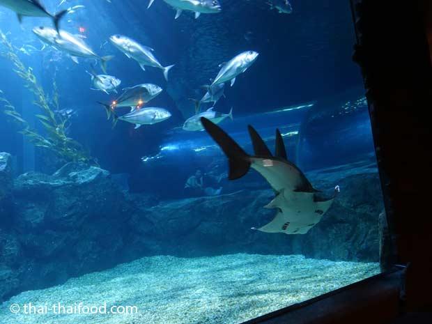 Unterwasser Glasröhre im Sea Life
