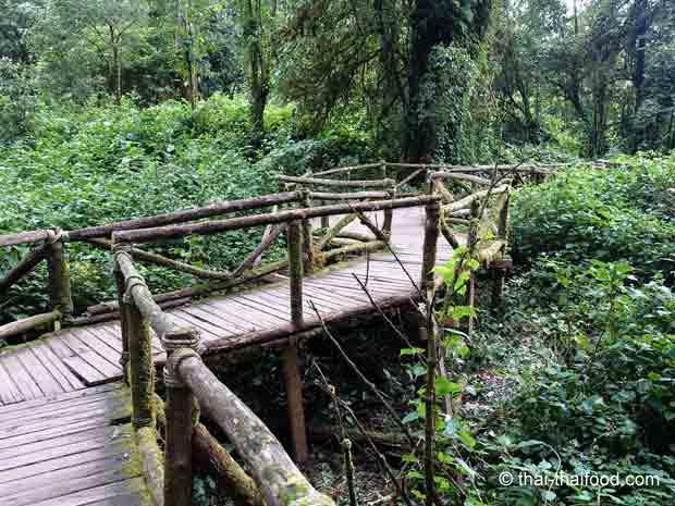 Chiang Mai Trekking - wandern auf dem Doi Inthanon
