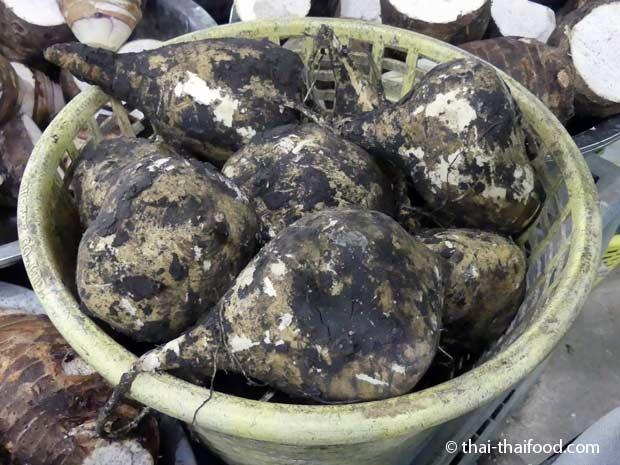 Yambohne kaufen in Thailand