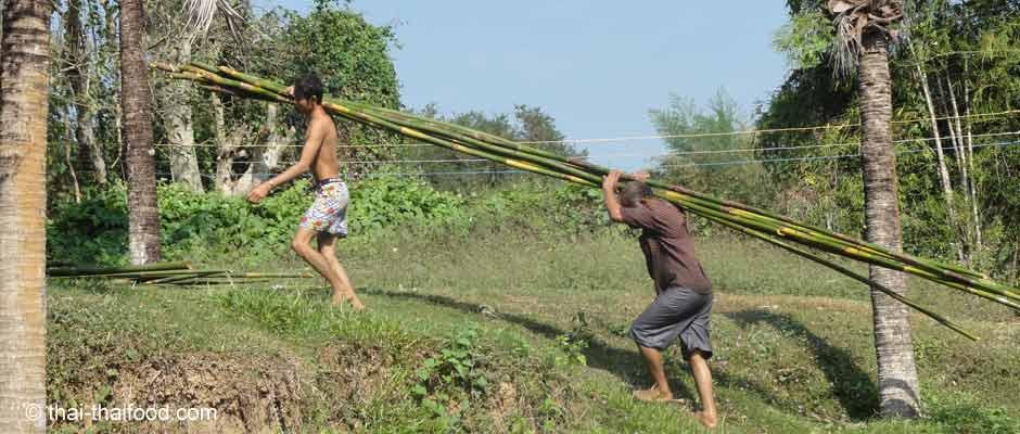 Moskitoschutz im Dschungel