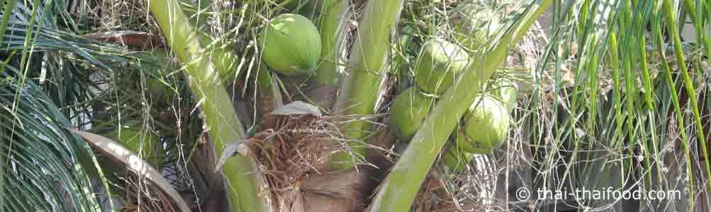 Thailändische Kokosnüsse