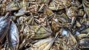 Käfer essen