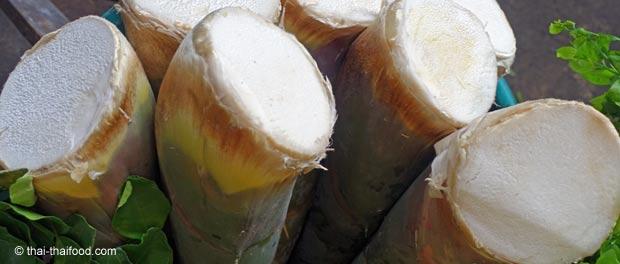 Junge Bambussprossen