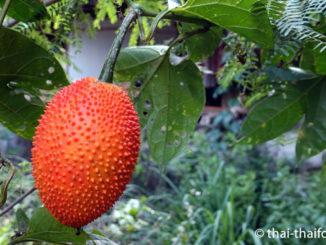 Gacfrucht