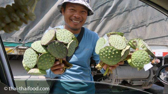 Lotusfrüchte kaufen