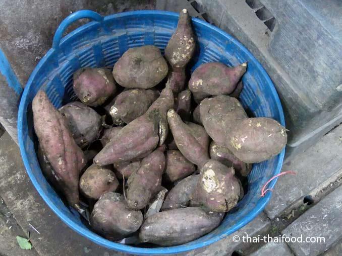Thai Süßkartoffel