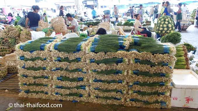 Thai Frühlingszwiebeln kaufen