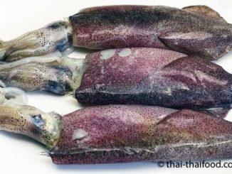 Tintenfische essen Thailand