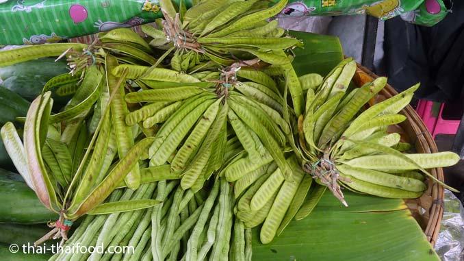 Asiatisches Gemüse Schoten der Weißkopfmimose